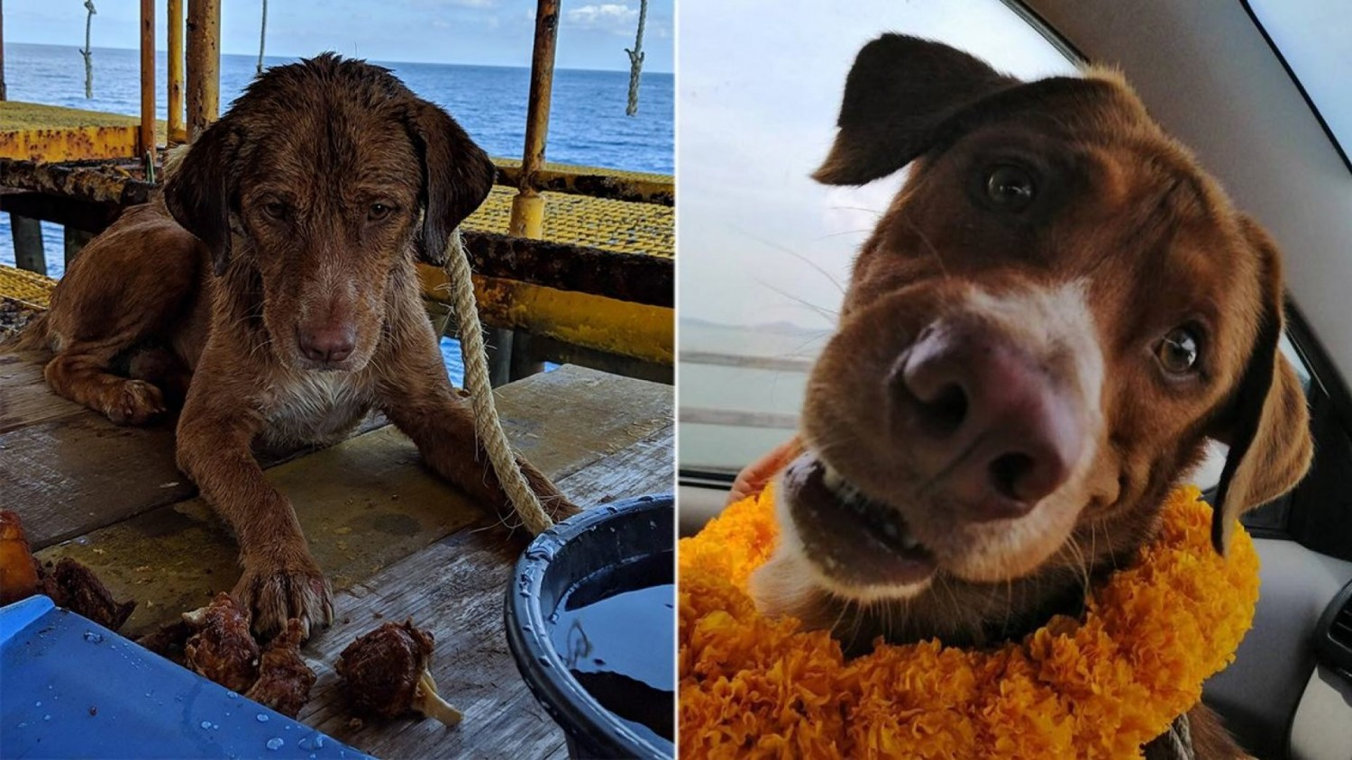 Thailand – Dog Discovered Paddling 130 Miles From Shore Rescued By Oil Rig Workers